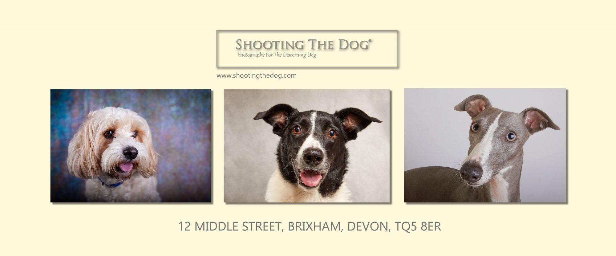 Dog Photography, Brixham, Devon